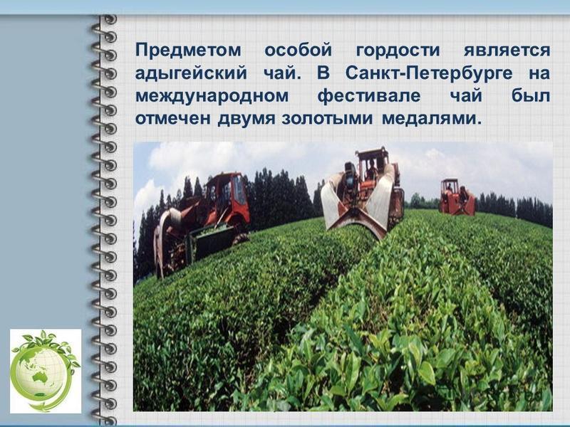 Предметом особой гордости является адыгейский чай. В Санкт-Петербурге на международном фестивале чай был отмечен двумя золотыми медалями.