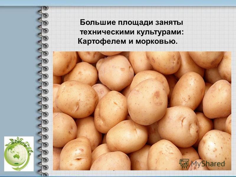 Большие площади заняты техническими культурами: Картофелем и морковью.