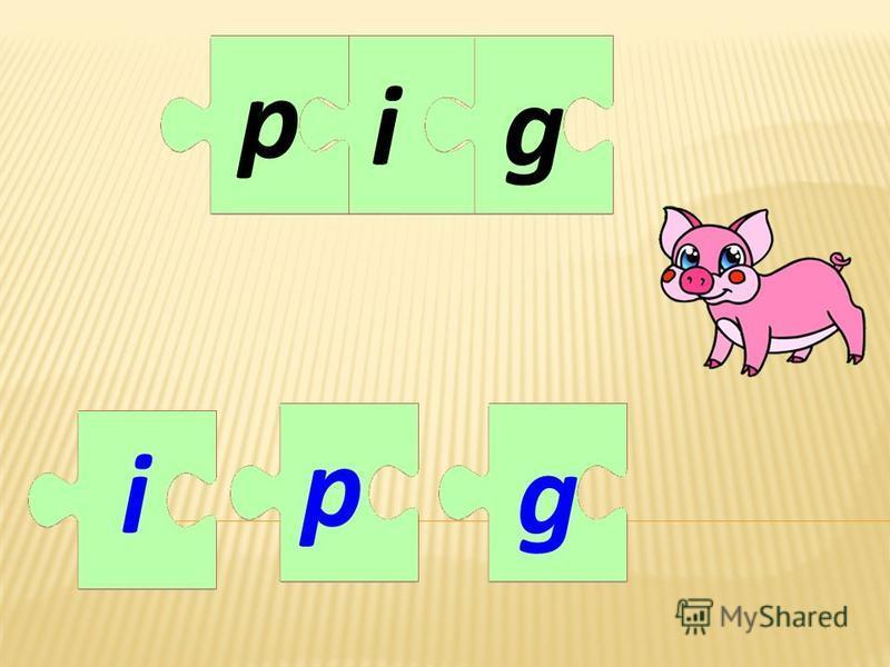 ig i g pp