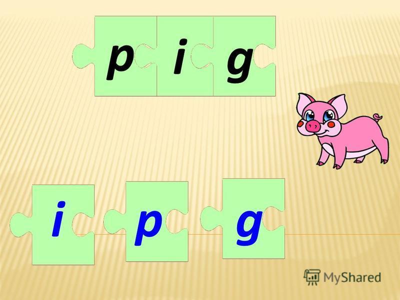igig pp