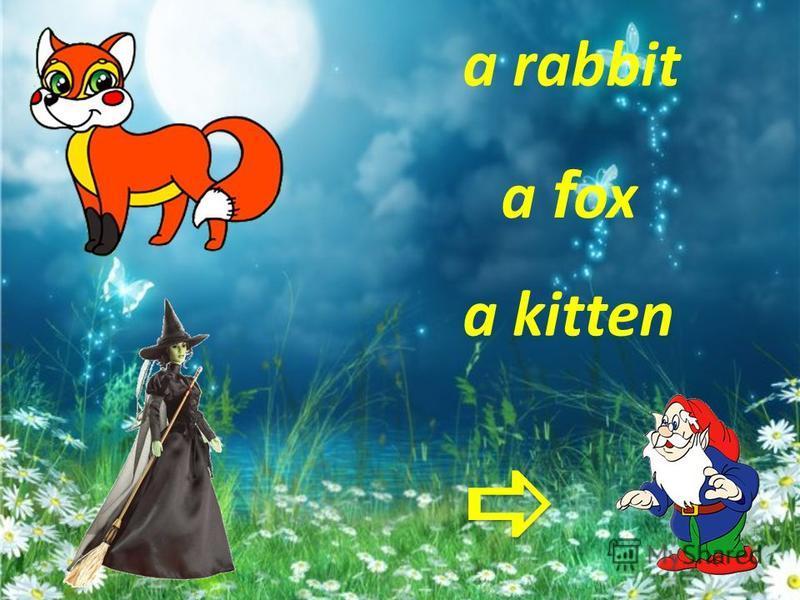 a hen a f rog a kitten