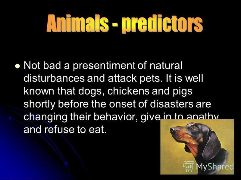 Not bad a presentiment of natural disturbances and attack pets. It is well known that dogs, chickens and pigs shortly before the onset of disasters are changing their behavior, give in to apathy and refuse to eat..