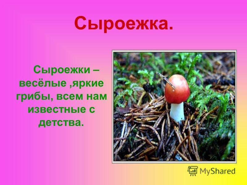 Сыроежка. Сыроежки – весёлые,яркие грибы, всем нам известные с детства.