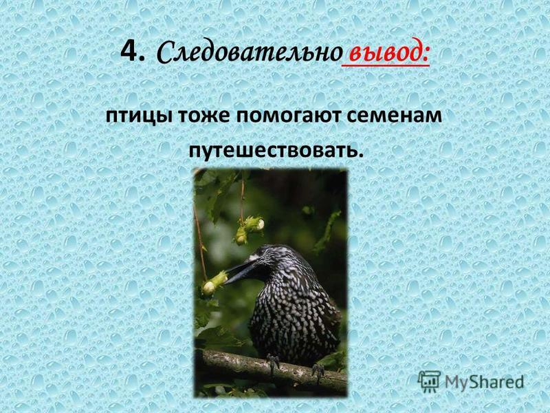 4. Следовательно вывод: птицы тоже помогают семенам путешествовать.