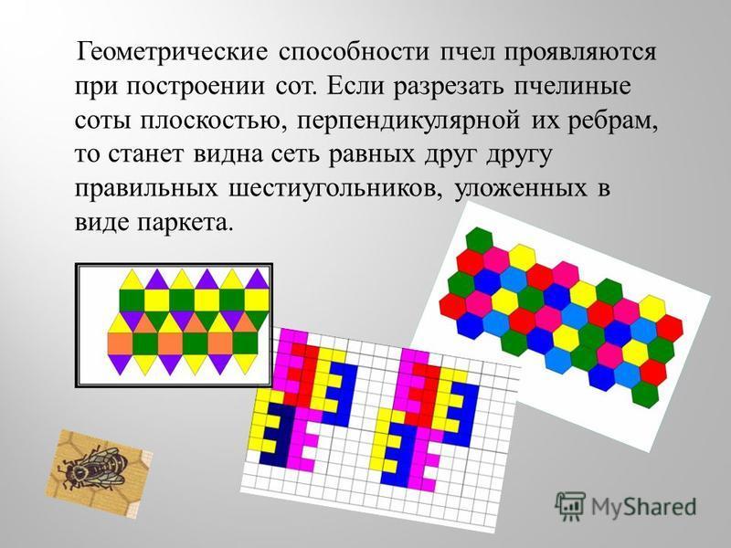 Геометрические способности пчел проявляются при построении сот. Если разрезать пчелиные соты плоскостью, перпендикулярной их ребрам, то станет видна сеть равных друг другу правильных шестиугольников, уложенных в виде паркета.