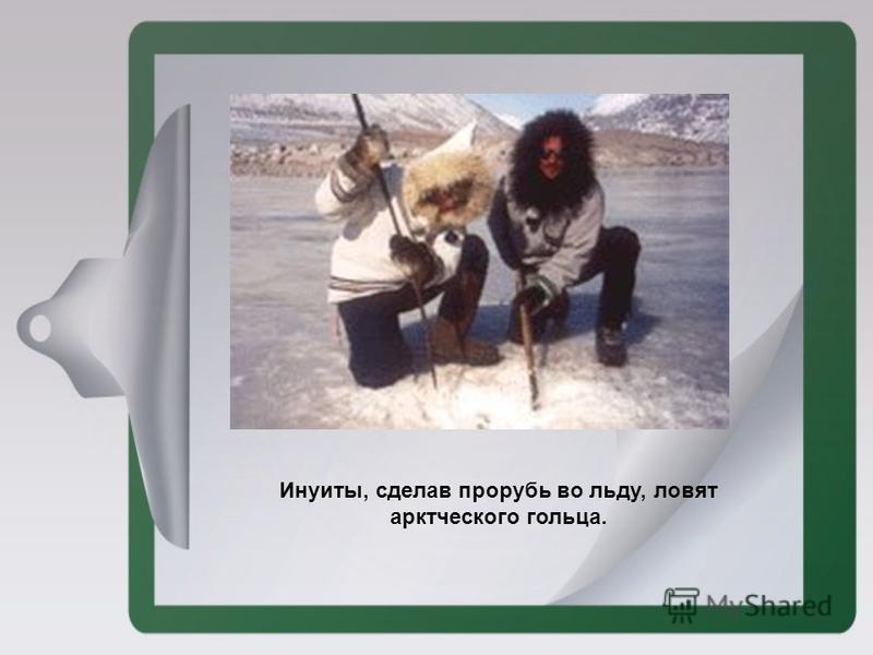 Инуиты, сделав прорубь во льду, ловят арктического гольца.