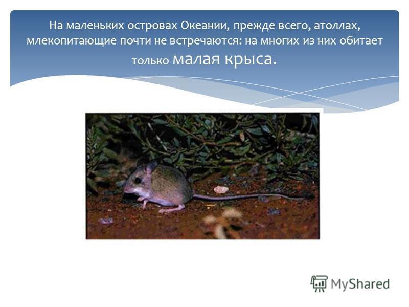 На маленьких островах Океании, прежде всего, атоллах, млекопитающие почти не встречаются: на многих из них обитает только малая крыса.