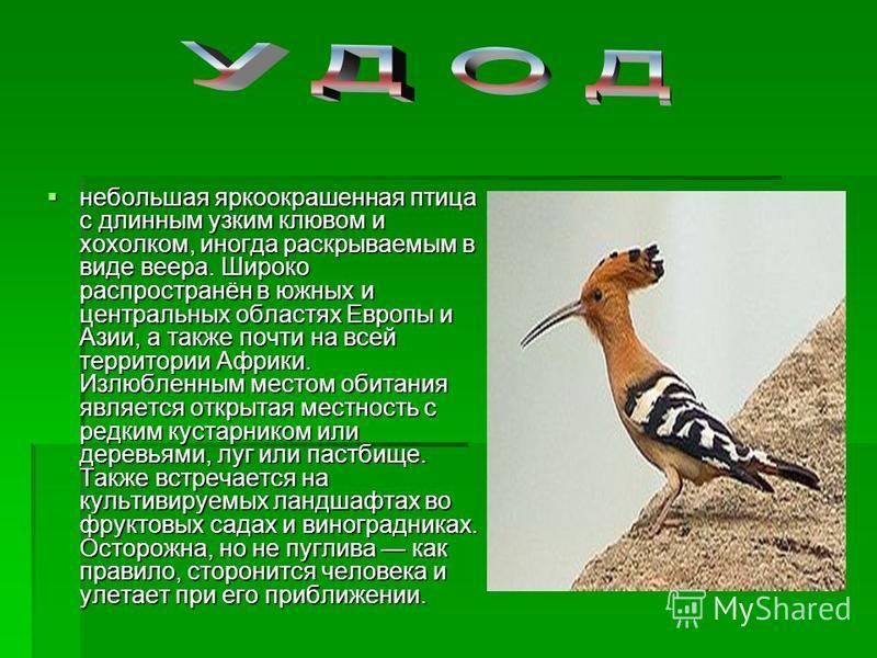 небольшая яркоокрашенная птица с длинным узким клювом и хохолком, иногда раскрываемым в виде веера. Широко распространён в южных и центральных областях Европы и Азии, а также почти на всей территории Африки. Излюбленным местом обитания является откры