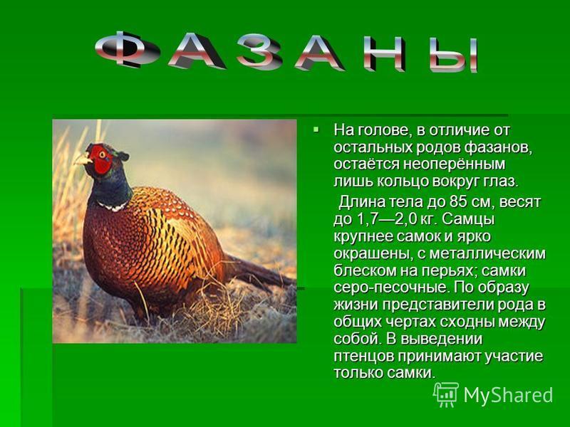На голове, в отличие от остальных родов фазанов, остаётся неоперённым лишь кольцо вокруг глаз. На голове, в отличие от остальных родов фазанов, остаётся неоперённым лишь кольцо вокруг глаз. Длина тела до 85 см, весят до 1,72,0 кг. Самцы крупнее самок