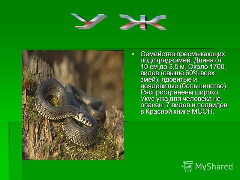 Семейство пресмыкающих подотряда змей. Длина от 10 см до 3,5 м. Около 1700 видов (свыше 60% всех змей), ядовитые и неядовитые (большинство). Распространены широко. Укус ужа для человека не опасен. 7 видов и подвидов в Красной книге МСОП. Семейство пр