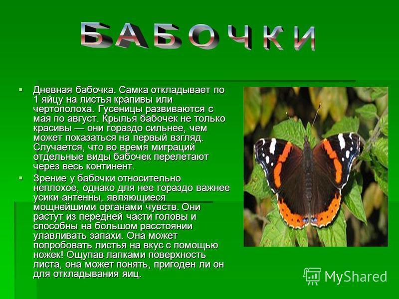Дневная бабочка. Самка откладывает по 1 яйцу на листья крапивы или чертополоха. Гусеницы развиваются с мая по август. Крылья бабочек не только красивы они гораздо сильнее, чем может показаться на первый взгляд. Случается, что во время миграций отдель
