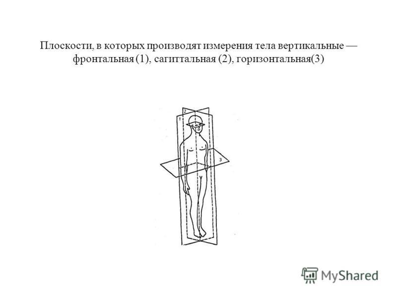 Плоскости, в которых производят измерения тела вертикальные фронтальная (1), сагиттальная (2), горизонтальная(3)