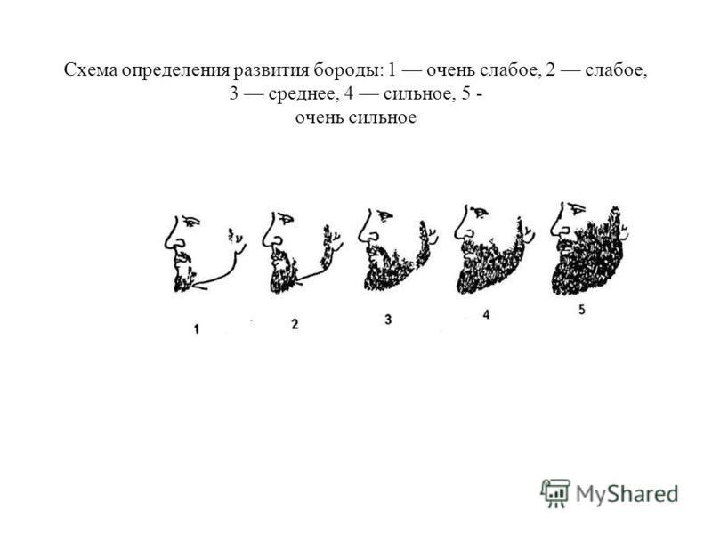 Схема определения развития бороды: 1 очень слабое, 2 слабое, 3 среднее, 4 сильное, 5 - очень сильное