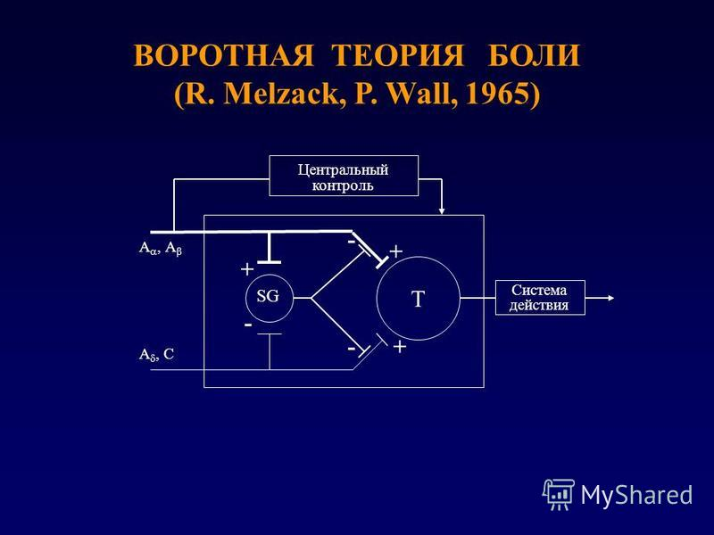 ВОРОТНАЯ ТЕОРИЯ БОЛИ (R. Melzack, P. Wall, 1965) Центральный контроль Система действия Т SG + +- - + - A A A C