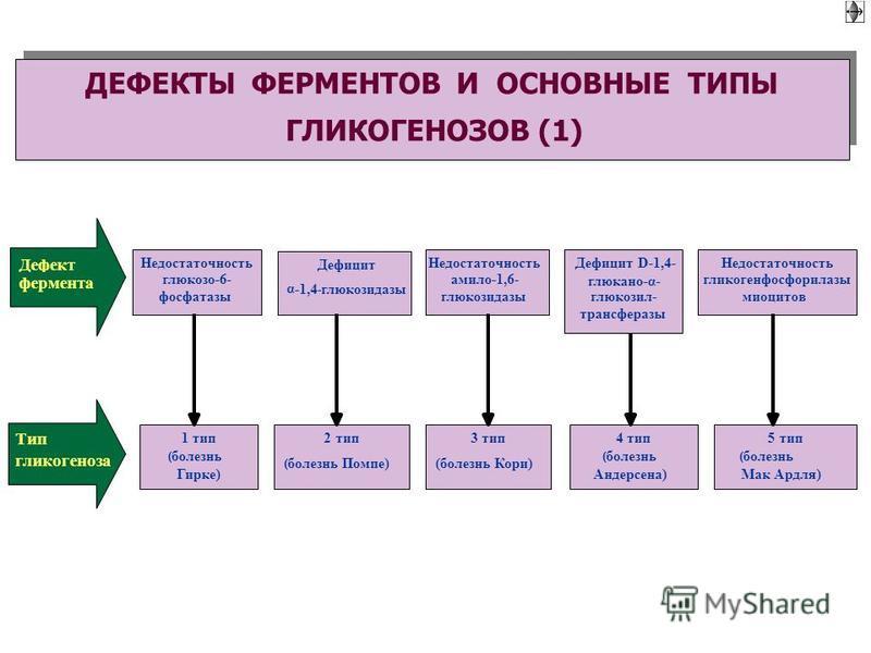 Недостаточность глюкозо-6- фосфатазы Дефект фермента Дефицит α -1,4-глюкозидазы Недостаточность амило-1,6- глюкозидазы Дефицит D-1,4- глюкано-α- глюкозил- трансферазы Недостаточность гликогенфосфорилазы миоцитов Тип гликогеноза 5 тип (болезнь Мак Ард