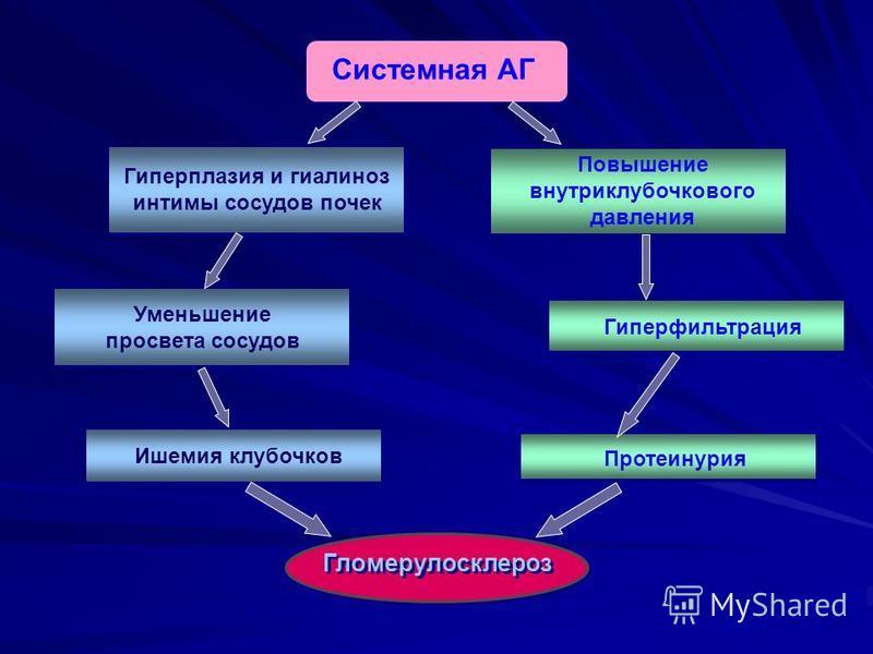 Системная АГ Гиперплазия и гиалиноз интимы сосудов почек Уменьшение просвета сосудов Гломерулосклероз Повышение внутриклубочкового давления Гиперфильтрация Ишемия клубочков Протеинурия