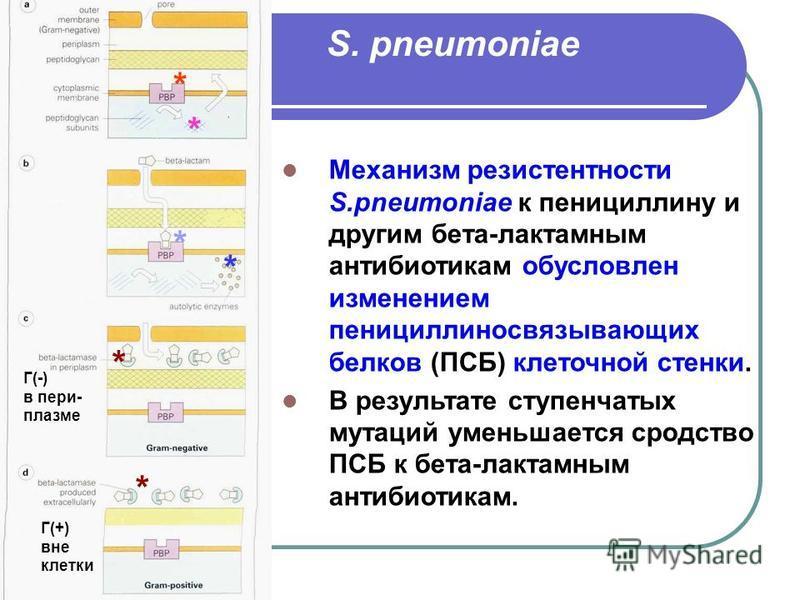 S. pneumoniae Механизм резистентности S.pneumoniae к пенициллину и другим бета-лактамным антибиотикам обусловлен изменением пенициллиносвязывающих белков (ПСБ) клеточной стенки. В результате ступенчатых мутаций уменьшается сродство ПСБ к бета-лактамн