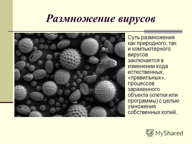 Размножение вирусов Суть размножения как природного, так и компьютерного вирусов заключается в изменении хода естественных, «правильных», процессов зараженного объекта (клетки или программы) с целью умножения собственных копий.