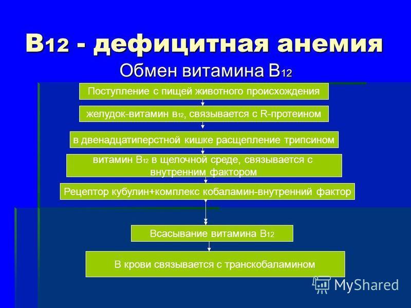 В 12 - дефицитная анемия Обмен витамина В 12 Поступление с пищей животного происхождения желудок-витамин в 12, связывается с R-протеином в двенадцатиперстной кишке расщепление трипсином витамин В 12 в щелочной среде, связывается с внутренним фактором