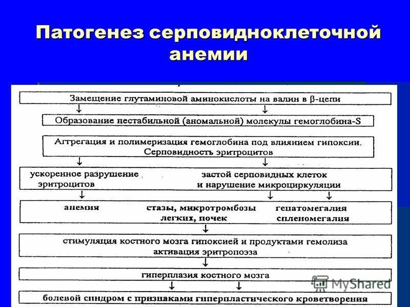 Патогенез серповидноклеточной анемии
