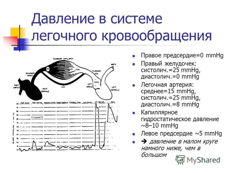 Давление в системе легочного кровообращения Правое предсердие=0 mmHg Правый желудочек: систолич.=25 mmHg, диастолич.=0 mmHg Легочная артерия: среднее=15 mmHg, систолич.=25 mmHg, диастолич.=8 mmHg Капиллярное гидростатическое давление ~8–10 mmHg Левое
