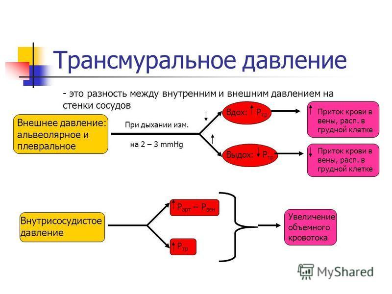 Трансмуральное давление - это разность между внутренним и внешним давлением на стенки сосудов Внешнее давление: альвеолярное и плевральное При дыхании изм. на 2 – 3 mmHg Вдох: Р тр Приток крови в вены, раса. в грудной клетке Выдох: Р тр Приток крови