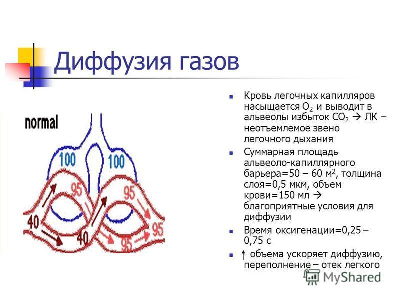 Диффузия газов Кровь легочных капилляров насыщается О 2 и выводит в альвеолы избыток СО 2 ЛК – неотъемлемое звено легочного дыхания Суммарная площадь альвеоло-капиллярного барьера=50 – 60 м 2, толщина слоя=0,5 мкм, объем крови=150 мл благоприятные ус