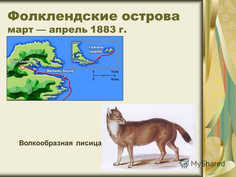Фолклендские острова март апрель 1883 г. Волкообразная лисица