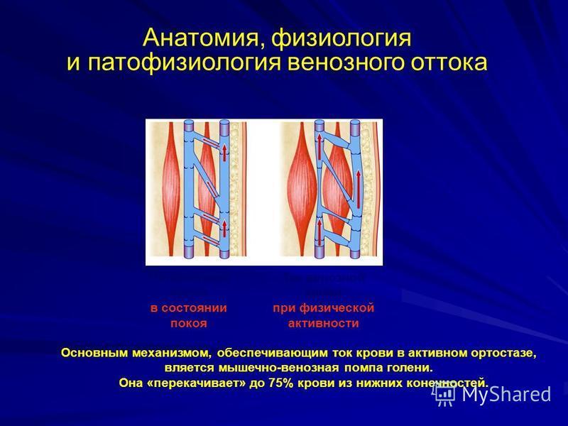 Основным механизмом, обеспечивающим ток крови в активном ортостазе, является мышечно-венозная помпа голени. Она «перекачивает» до 75% крови из нижних конечностей. Анатомия, физиология и патофизиология венозного оттока Ток венозной крови в состоянии п