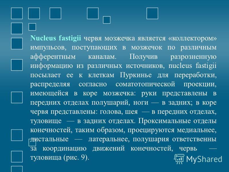 Nucleus fastigii червя мозжечка является «коллектором» импульсов, поступающих в мозжечок по различным афферентным каналам. Получив разрозненную информацию из различных источников, nucleus fastigii посылает ее к клеткам Пуркинье для переработки, распр