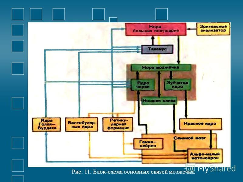 Рис. 11. Блок-схема основных связей мозжечка.