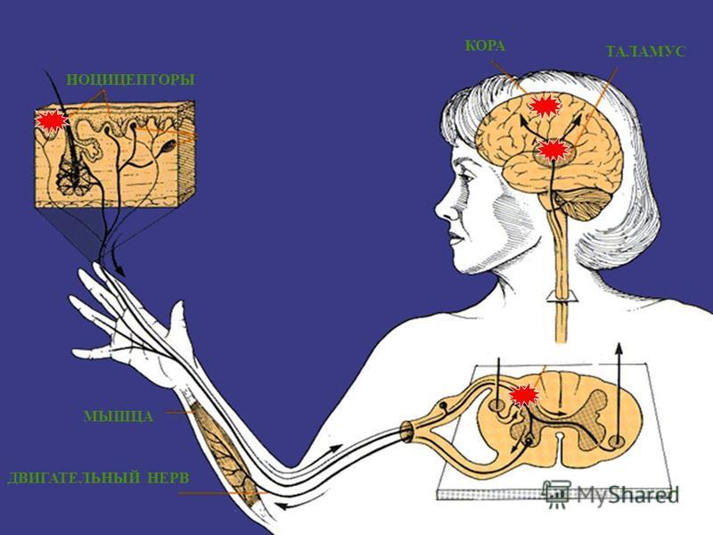 Купирование болевого синдрома Местноанестезирующая терапия Местноанестезирующая терапия НПВС НПВС Антидепрессанты Антидепрессанты Антиконвульсантная терапия Антиконвульсантная терапия