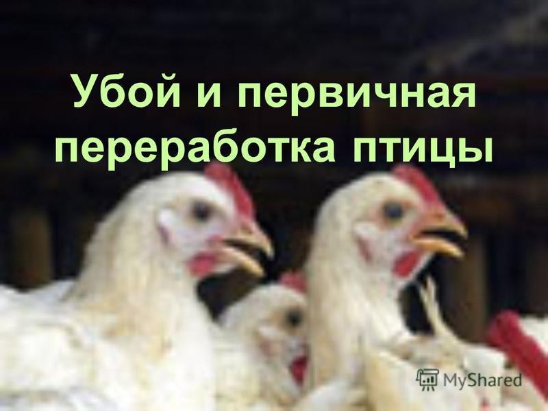 Убой и первичная переработка птицы
