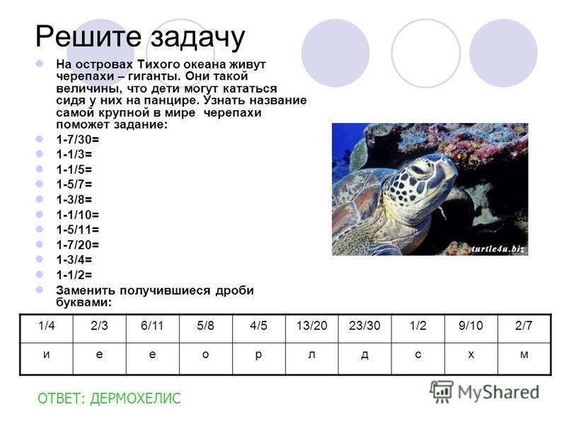 Решите задачу На островах Тихого океана живут черепахи – гиганты. Они такой величины, что дети могут кататься сидя у них на панцире. Узнать название самой крупной в мире черепахи поможет задание: 1-7/30= 1-1/3= 1-1/5= 1-5/7= 1-3/8= 1-1/10= 1-5/11= 1-