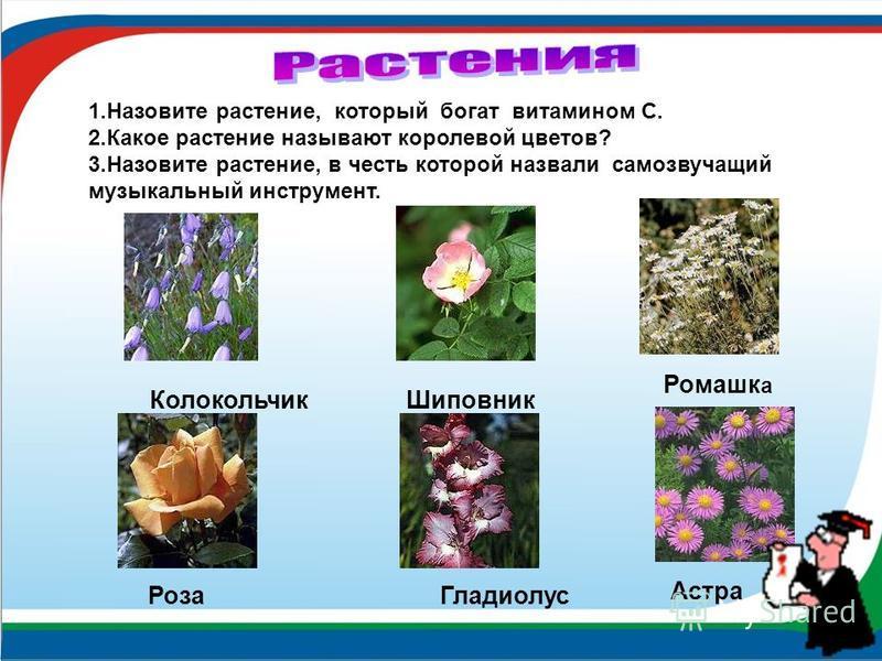 Колокольчик Шиповник Роза Гладиолус 1. Назовите растение, который богат витамином С. 2. Какое растение называют королевой цветов? 3. Назовите растение, в честь которой назвали самозвучащий музыкальный инструмент. Ромашк а Астра