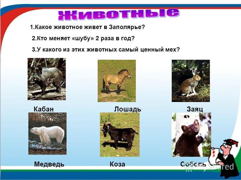 Кабан Лошадь Заяц Медведь Коза Соболь 1. Какое животное живет в Заполярье? 2. Кто меняет «шубу» 2 раза в год? 3. У какого из этих животных самый ценный мех?