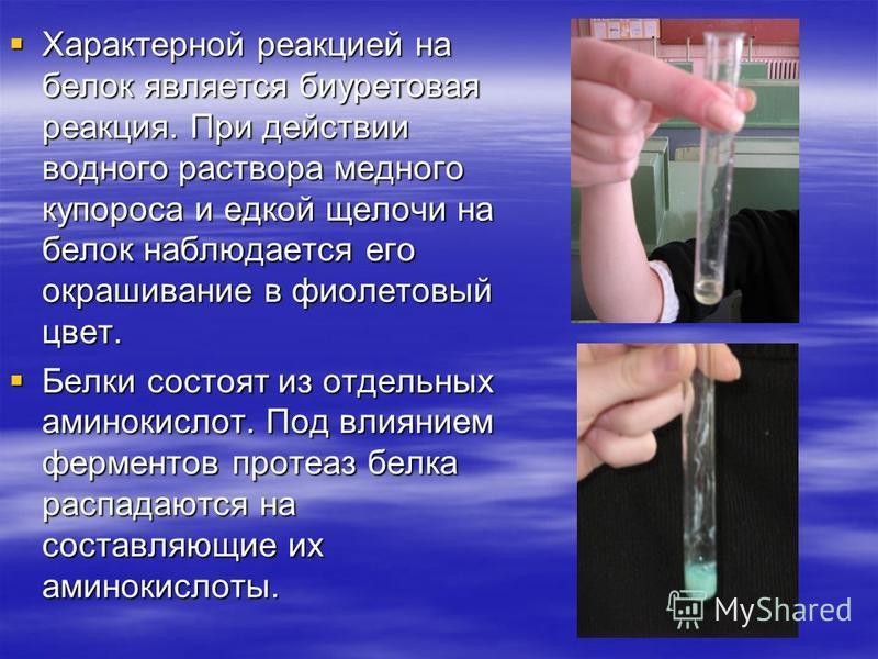 Характерной реакцией на белок является биуретовая реакция. При действии водного раствора медного купороса и едкой щелочи на белок наблюдается его окрашивание в фиолетовый цвет. Характерной реакцией на белок является биуретовая реакция. При действии в