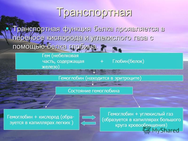 Тршшанспортная Тршшанспортная функция белка проявляется в переносе кислорода и углекислого газа с помощью белка глобина. Тршшанспортная функция белка проявляется в переносе кислорода и углекислого газа с помощью белка глобина. Гем (небелковая часть,