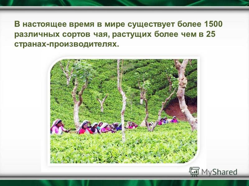 В настоящее время в мире существует более 1500 различных сортов чая, растущих более чем в 25 странах-производителях.