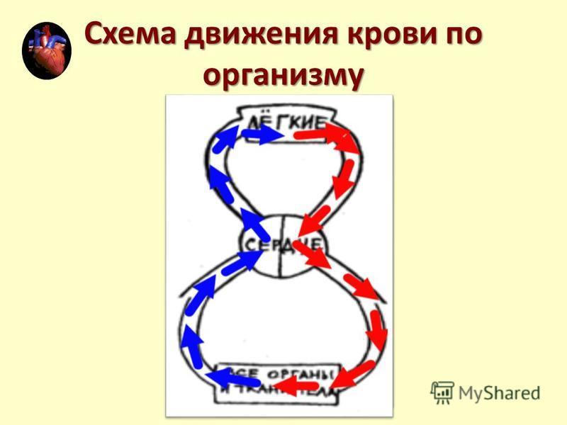Схема движения крови по организму