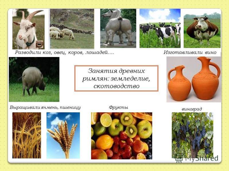 Занятия древних римлян: земледелие, скотоводство Разводили коз, овец, коров, лошадей….Изготавливали вино Выращивали ячмень, пшеницу Фрукты виноград