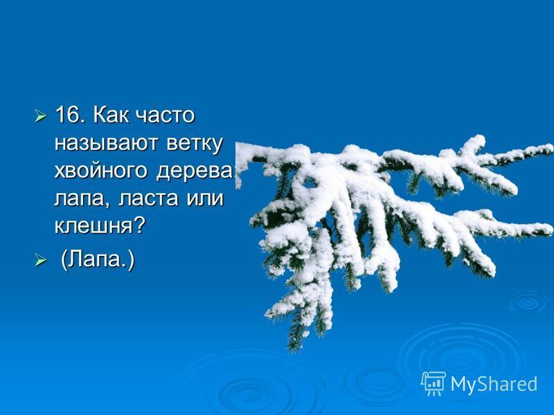 16. Как часто называют ветку хвойного дерева: лапа, ласта или клешня? 16. Как часто называют ветку хвойного дерева: лапа, ласта или клешня? (Лапа.) (Лапа.)