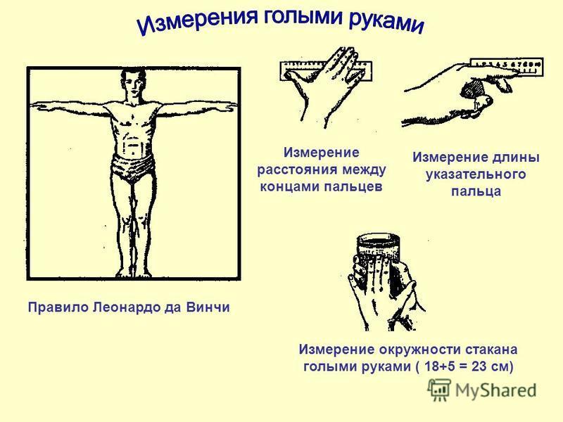 Правило Леонардо да Винчи Измерение расстояния между концами пальцев Измерение длины указательного пальца Измерение окружности стакана голыми руками ( 18+5 = 23 см)