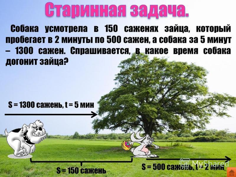 Собака усмотрела в 150 саженях зайца, который пробегает в 2 минуты по 500 сажен, а собака за 5 минут – 1300 сажен. Спрашивается, в какое время собака догонит зайца? S = 150 сажень S = 500 сажень, t = 2 мин S = 1300 сажень, t = 5 мин