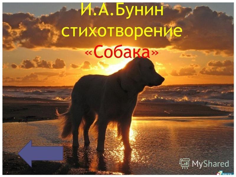 И.А.Бунин стихотворение «Собака»