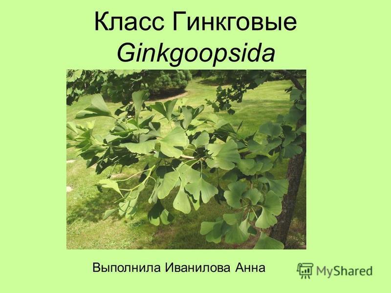 Класс Гинкговые Ginkgoopsida Выполнила Иванилова Анна