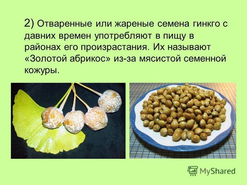 2) Отваренные или жареные семена гинкго с давних времен употребляют в пищу в районах его произрастания. Их называют «Золотой абрикос» из-за мясистой семенной кожуры.
