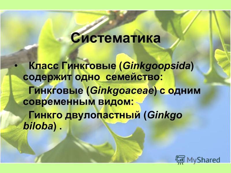 Систематика Класс Гинкговые (Ginkgoopsida) содержит одно семейство: Гинкговые (Ginkgoaceae) с одним современным видом: Гинкго двулопастный (Ginkgo biloba).