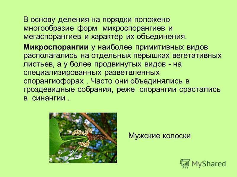В основу деления на порядки положено многообразие форм микроспорангиев и мегаспорангиев и характер их объединения. Микроспорангии у наиболее примитивных видов располагались на отдельных перышках вегетативных листьев, а у более продвинутых видов - на