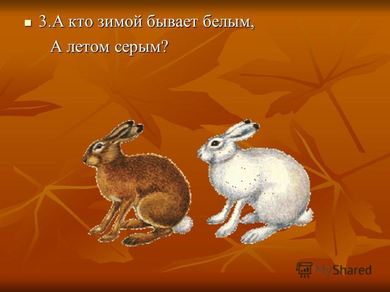 3. А кто зимой бывает белым, 3. А кто зимой бывает белым, А летом серым? А летом серым?
